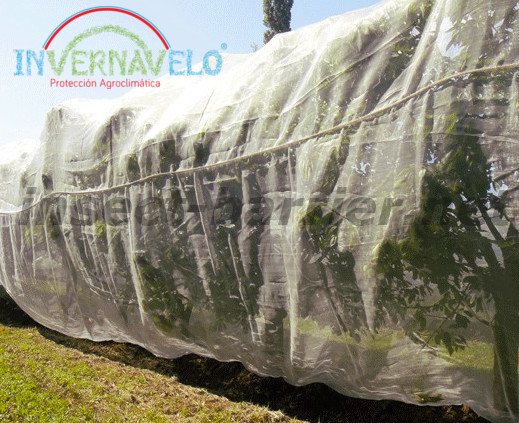 trees protected with the anti aphid mesh.