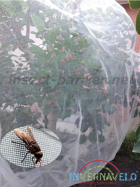 plant protected with the attack of the insects with the insects barrier.