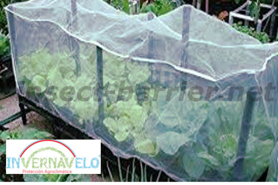 Crops protected with the anti aphid mesh.