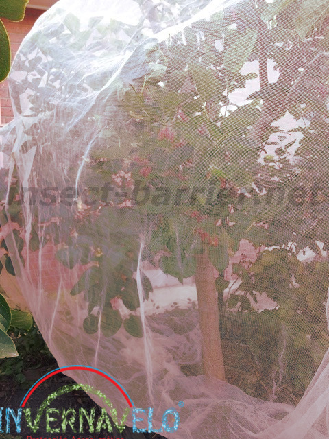 anti aphid mesh protecting the tree.